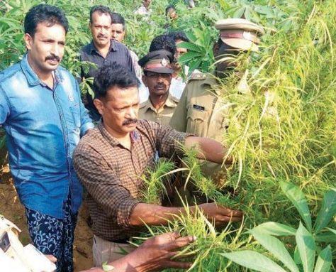 edayur weed