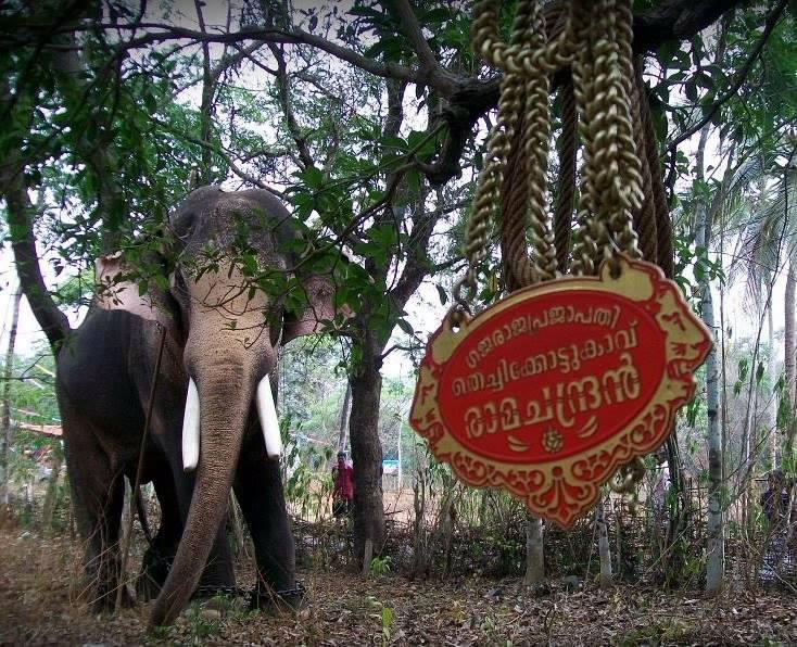 ramachandran-elephant
