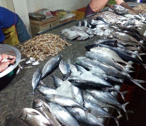 valanchery-fish