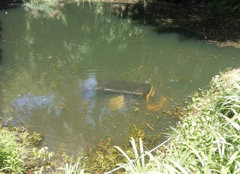 auto-pond