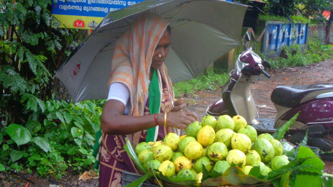 tamil-guava