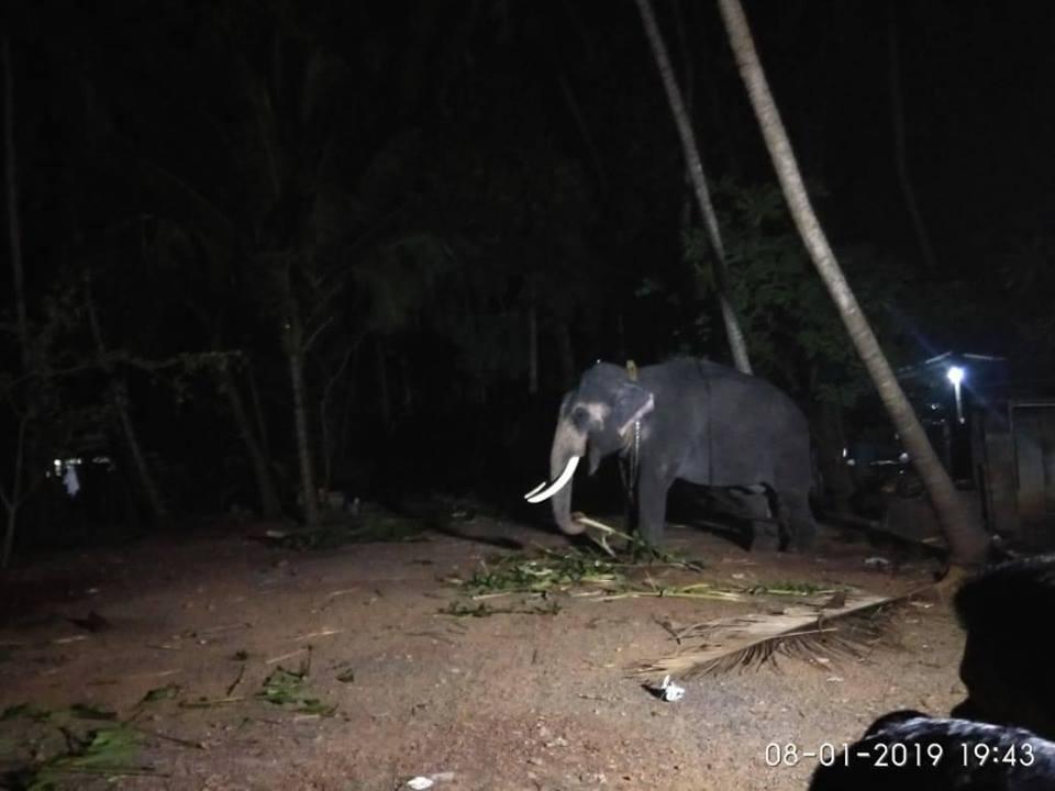 elephant-violent