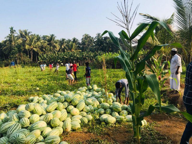 water-melon-kottakkal