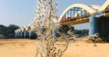 kuttippuram-bridge