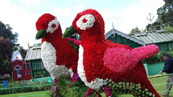 ooty-flower-show