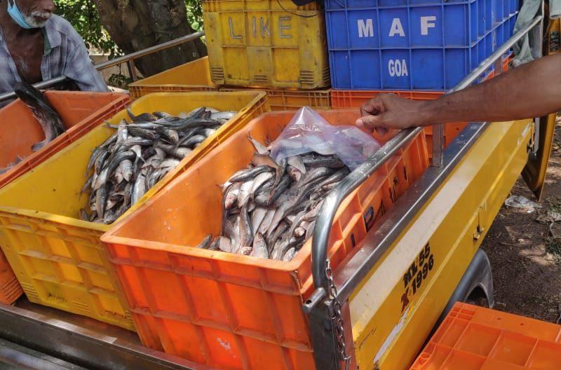rotten-fish-valanchery