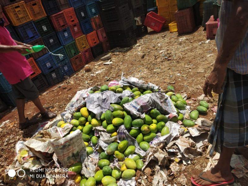 kottakkal-mango