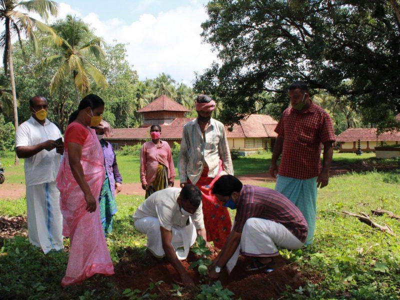 painkannur-temple-sapling-plant