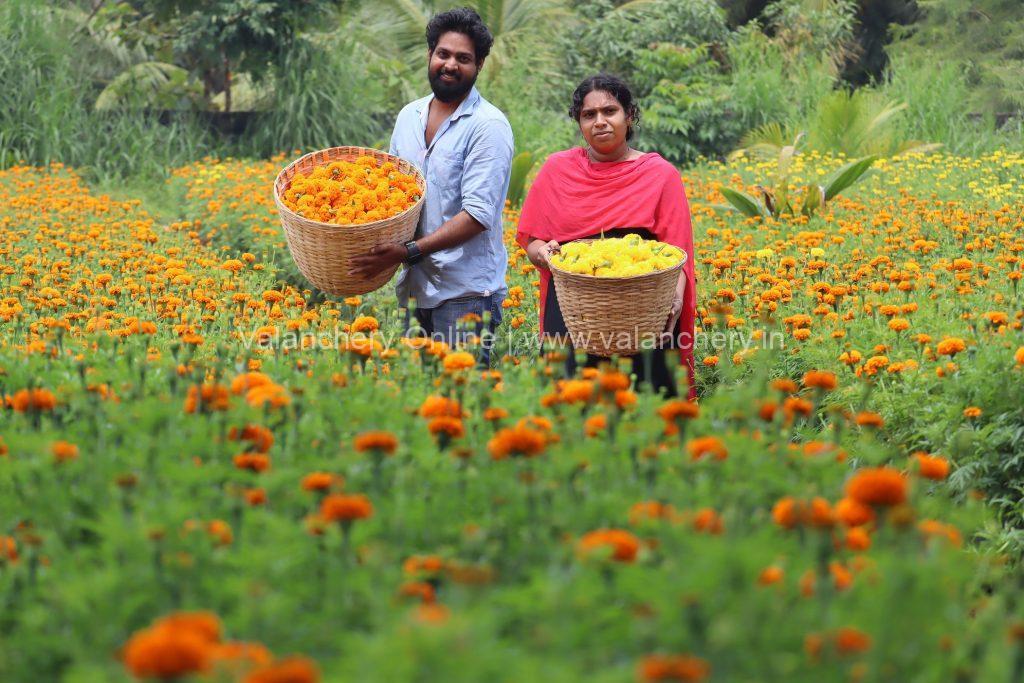 marigold-niramaruthoor