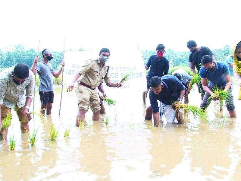 nss-irimbiliyam-paddy-cultivation