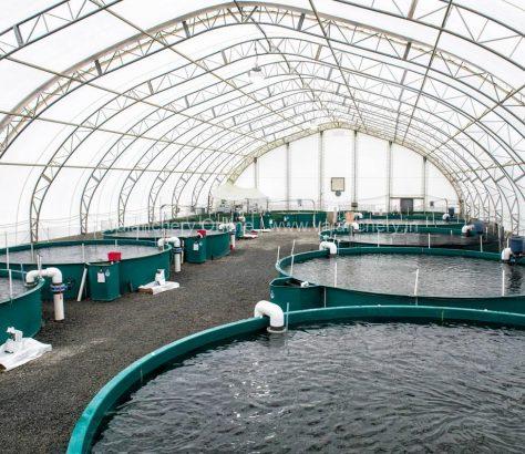 fish-farming