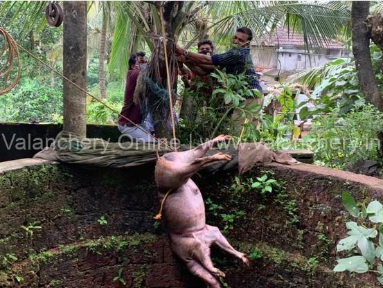 wild-boar-puthanathani