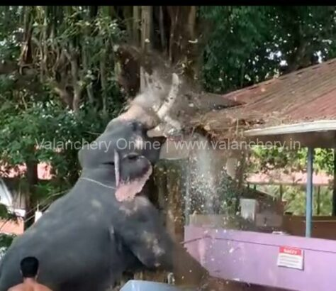 elephant-violent-angadippuram-pooram