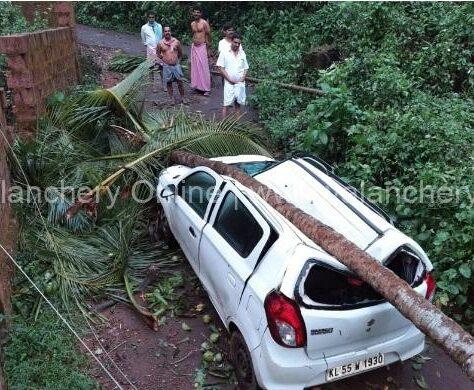 valiyaparappur-car-tree