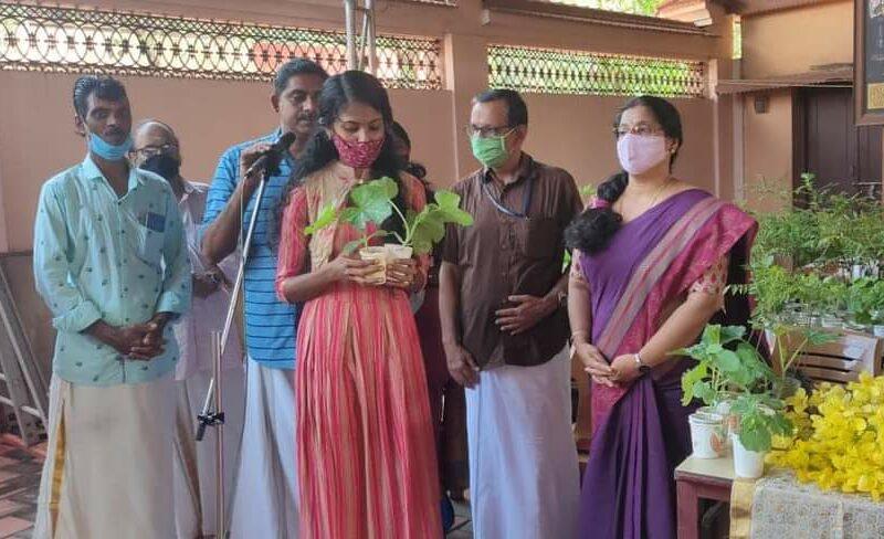 ayudh-tanur-saplings-kadampuzha