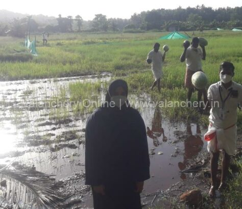 kuttippuram-block-rain-crops