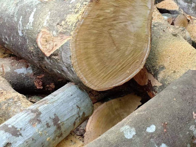 wood-mill